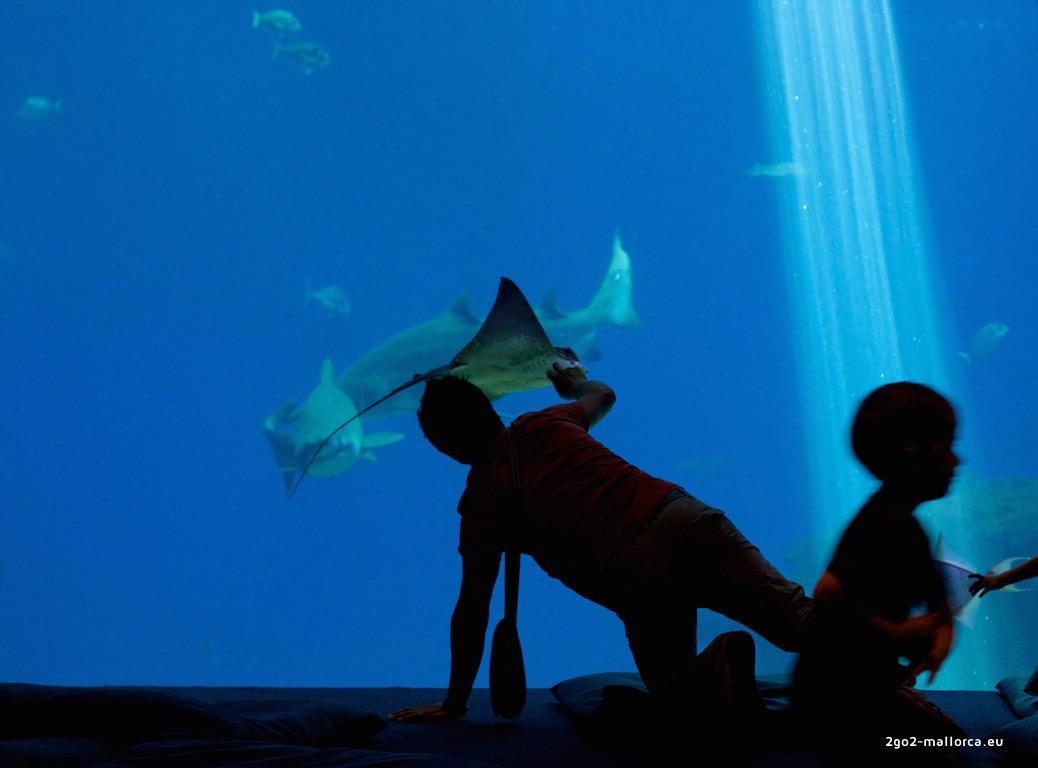 raya palma aquarium doschu