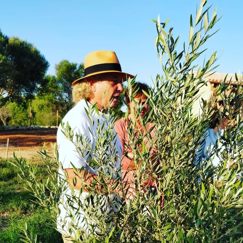 Hans im Olivenhain Can OmXai