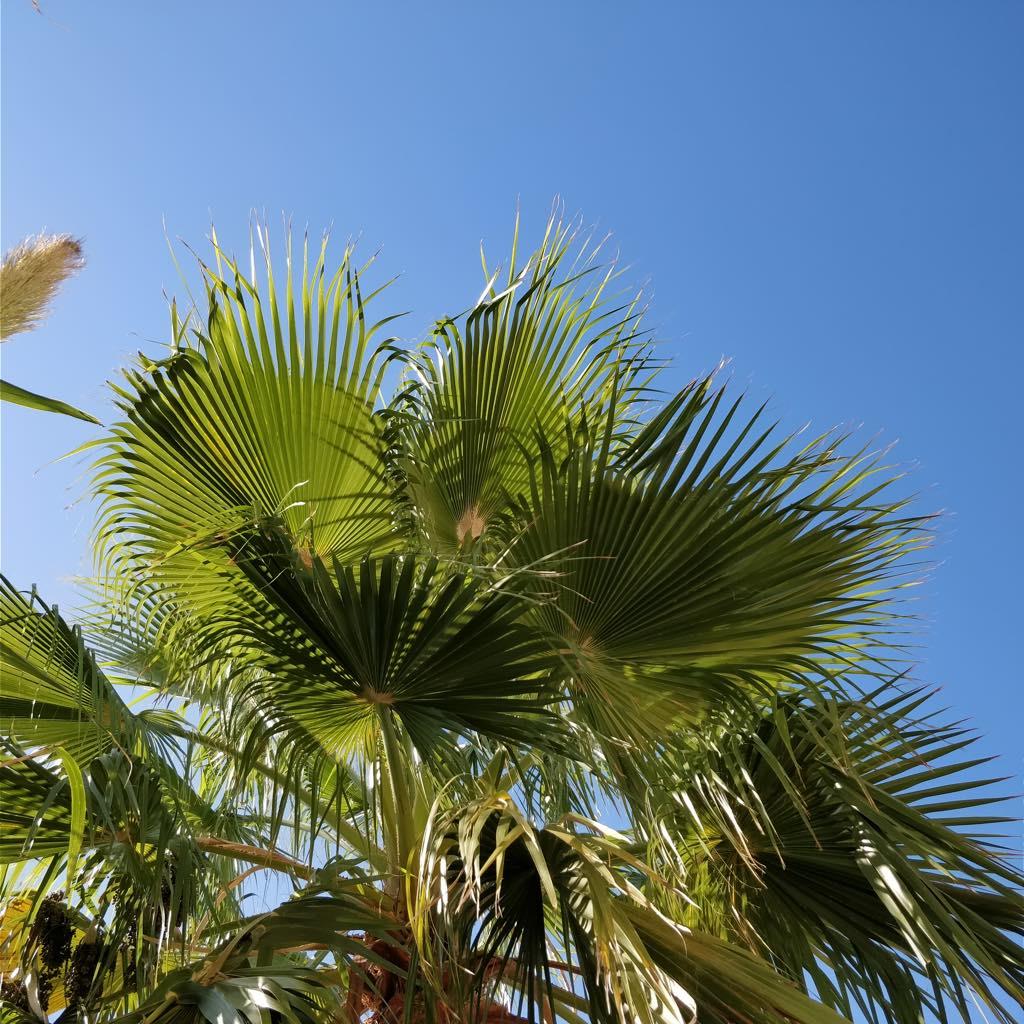 palmen himmelblau