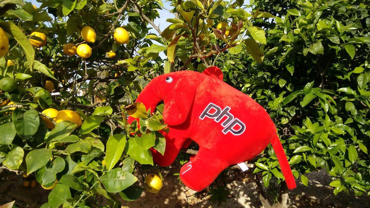 zitronenbaum mit elePHPant Mallorca