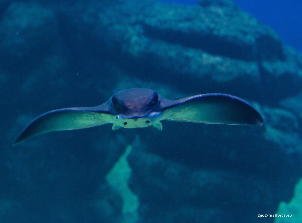 Gran Azul Palma Aquarium