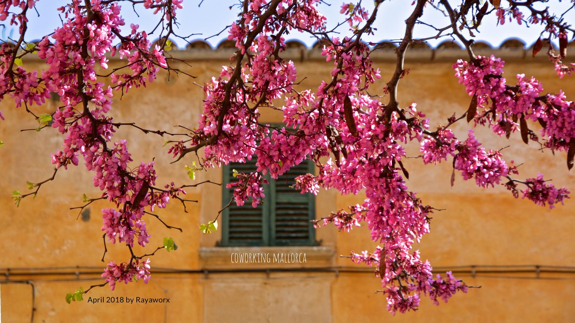 Mallorca Wallpaper Rayaworx April